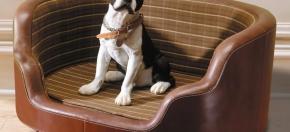 Canine Hospitality w/COM Fabric